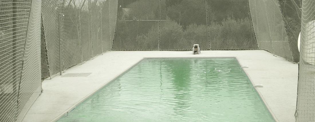 2132290041-ntw-swimming-pool-5 construction process