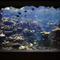 1006526458_23-coral-reef-window Photo  Tim Griffith