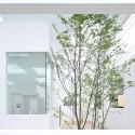 744427144_house-n-fujimoto-4978 744427144_house-n