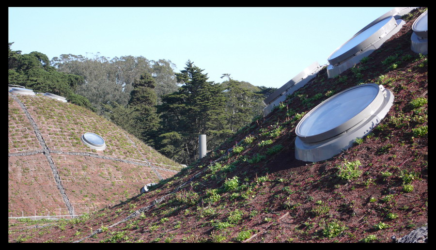 California Academy of Science / Green roof construction and opening