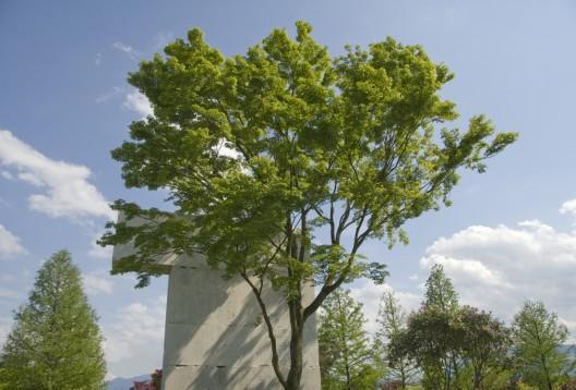 Tree Museum / Enea Garden Design | ArchDaily