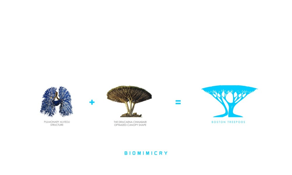 the definition of biomimicry Biomimicry definition at dictionarycom, a free online dictionary with pronunciation, synonyms and translation look it up now.