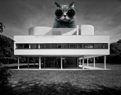 The Invasion of Architectural LOLCats