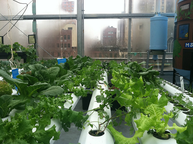 Largest Rooftop Farm Coming to Brooklyn, NY