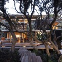 Under Pohutukawa / Herbst Architects © Patrick Reynolds