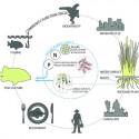 """""""El agua, la memoria '- Propuesta de Replanteamiento de la competencia de Shanghai (18) diagrama de los humedales"""