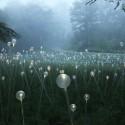 Impresionantes Bruce Munro Instalaciones LED iluminan los jardines de Longwood (1) Cortesía de Bruce Munro