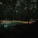 Impresionantes Bruce Munro Instalaciones LED iluminan los jardines de Longwood (22) Cortesía de Bruce Munro