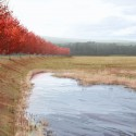 Flight 93 National Memorial / Paul Murdoch Architects (19) Allee Wetlands: Competition Rendering  Biolinia &amp; Paul Murdoch Architects