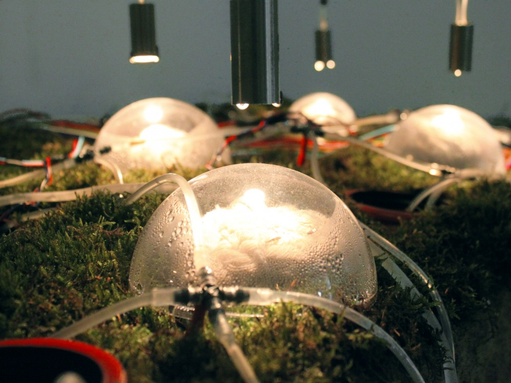 &#8216;Networking Nature&#8217; Installation / Studiomobile