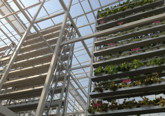 Vegetables grown in multi-level troughs at Sky Greens farm. Image via Olivia Siong, Channel NewsAsia