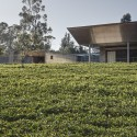 House in a Tea Garden / RMA Architects  Rajesh Vora