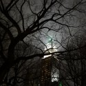 AD Classics: Woolworth Building / Cass Gilbert Night view through trees. Image © Aaron Sylvan