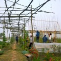 Vegetable Nursery House / 1+1>2 International Architecture JSC Courtesy of 1+1>2 International Architecture JSC