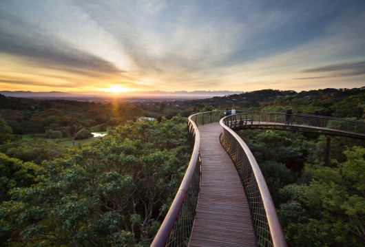 Light Steel Frame Structures Cape Town South Africa: Kirstenbosch Centenary Tree Canopy Walkway / Mark Thomas