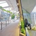 Gran Simio Casa / Hascher Jehle Architektur El Gorila y el recinto Bonobo están situados en frente a otro.  Imagen © Svenja Bockhop